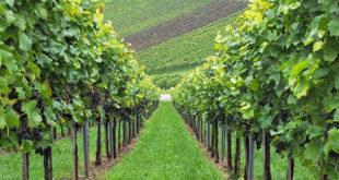 Covid-19, il vino abruzzese punta sull'e-commerce per il rilancio