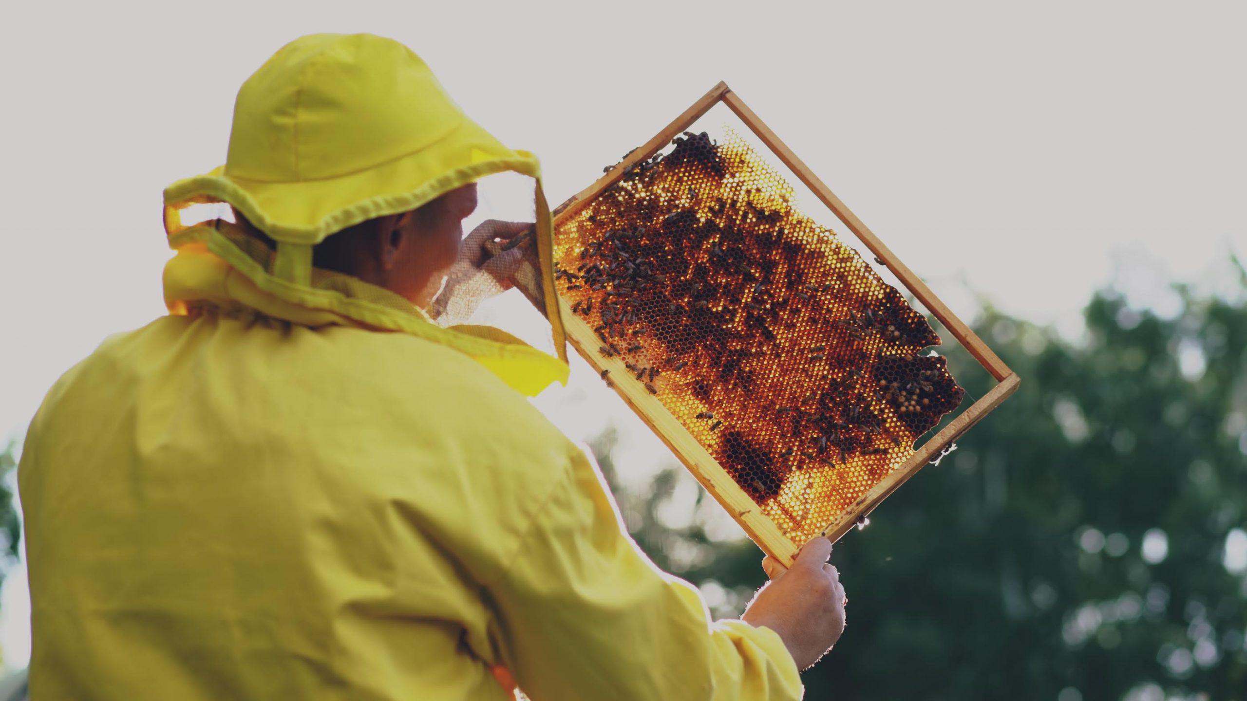 Alfonsino adotta 60.000 api